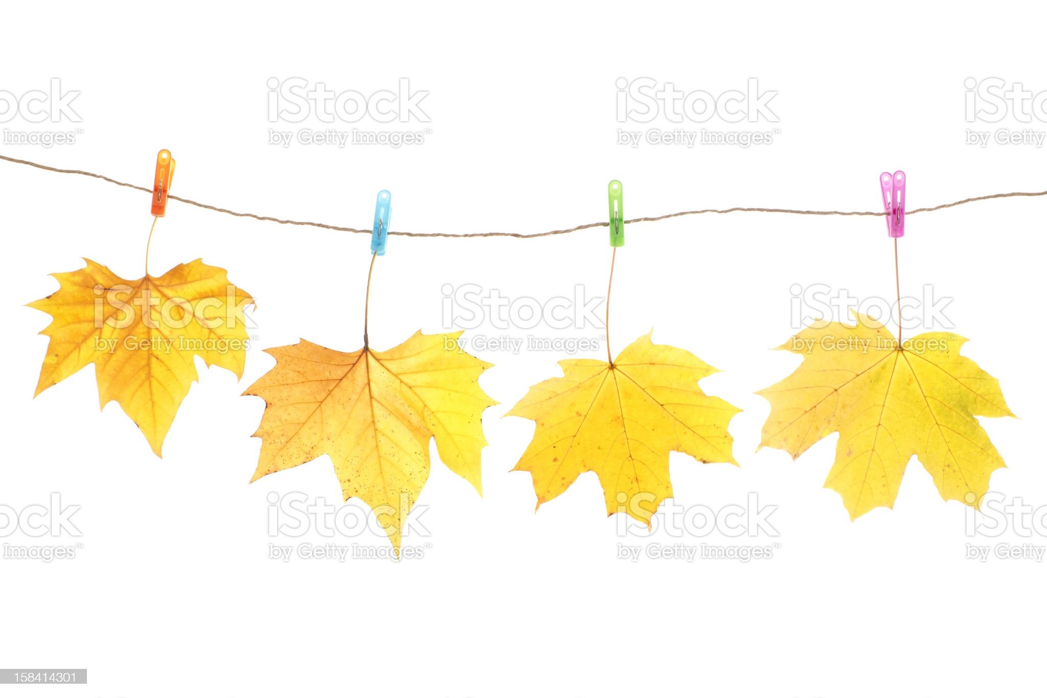 Autumn leaves and clothes pegs, isolated on white royalty-free stock photo