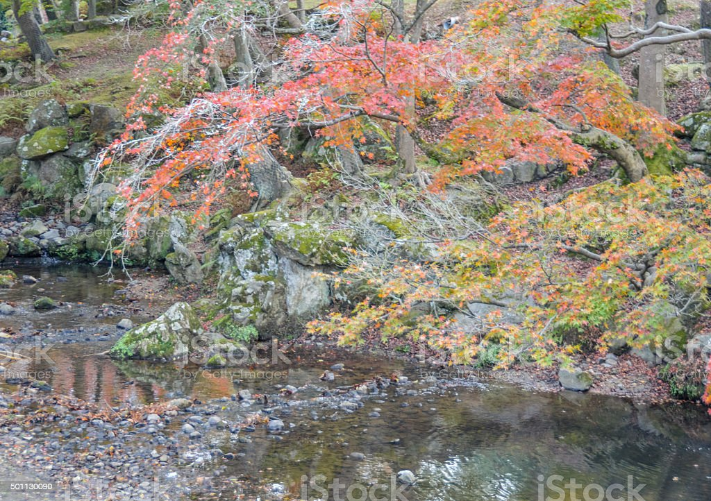 Autumn leaves and foliage in Japan stock photo