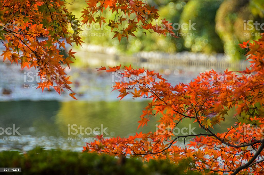 Autumn leaves and foliage in Kyoto, Japan stock photo