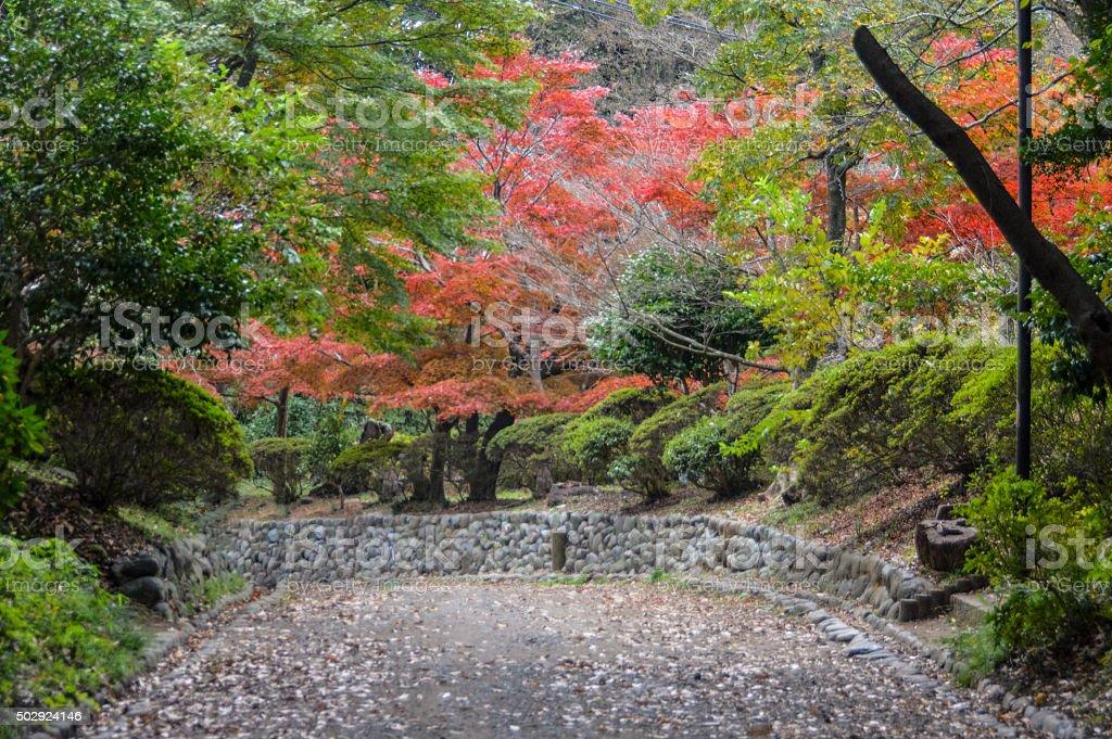 Autumn leaves and foliage on stone road in Kamakura, Japan stock photo