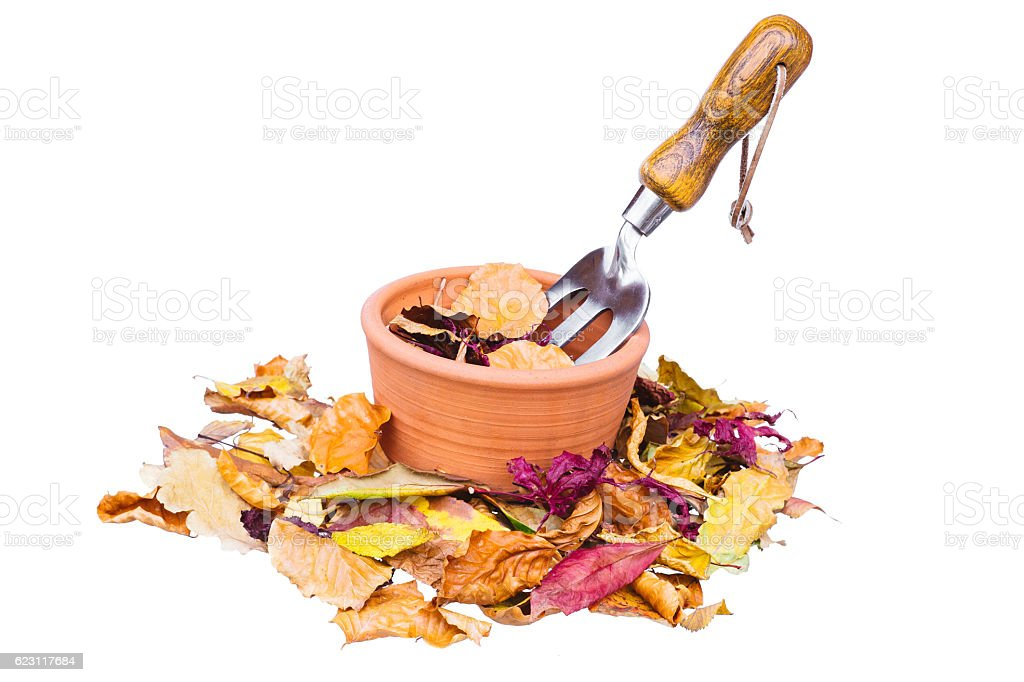Autumn leaves and garden fork on pot, on white stock photo
