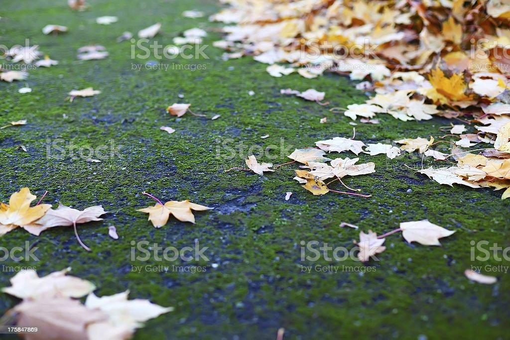 秋の葉緑、モス ロイヤリティフリーストックフォト