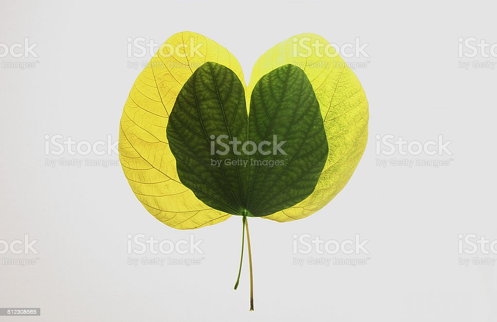 autumn leaves and love royalty-free stock photo