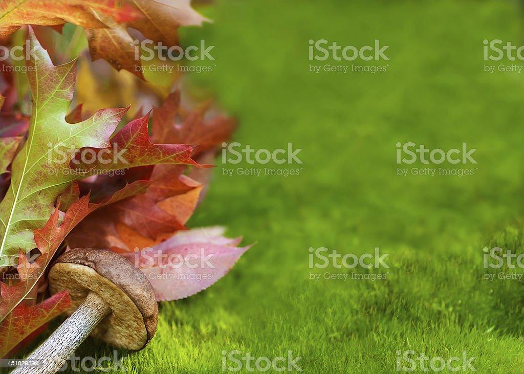 Autumn leaves and mushroom royalty-free stock photo