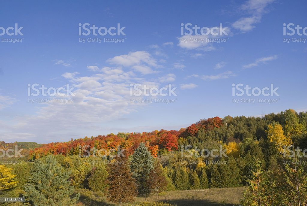 autumn leaves and sky royalty-free stock photo