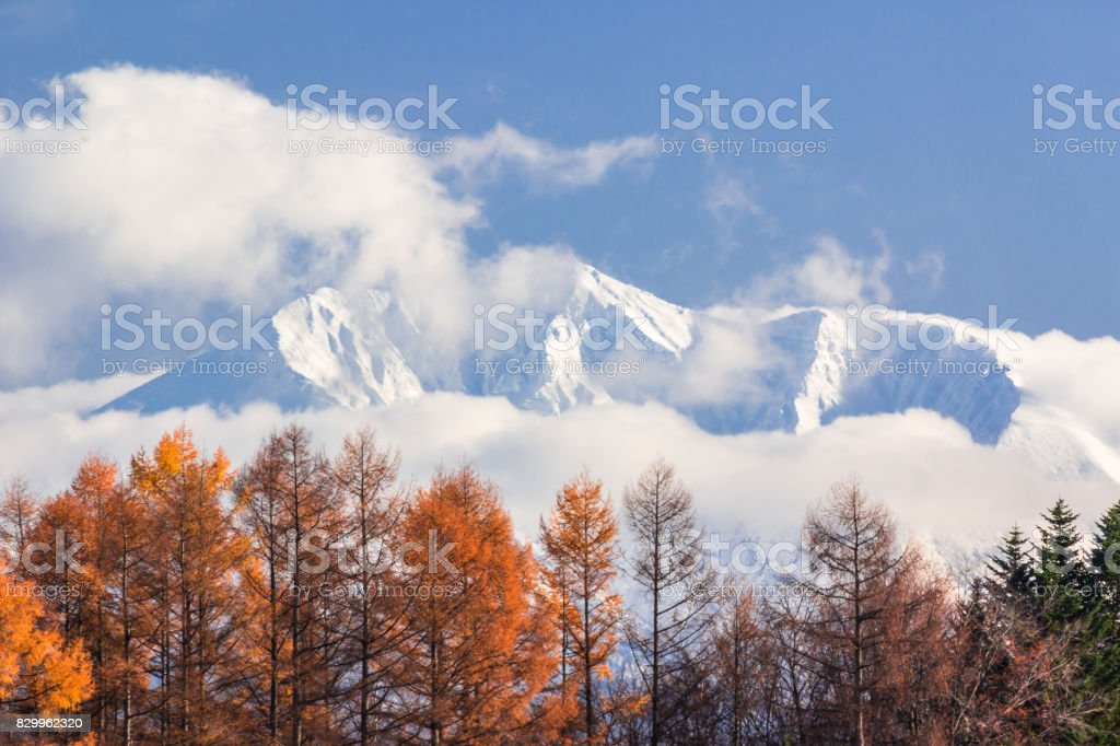 Autumn leaves and snow mountains stock photo