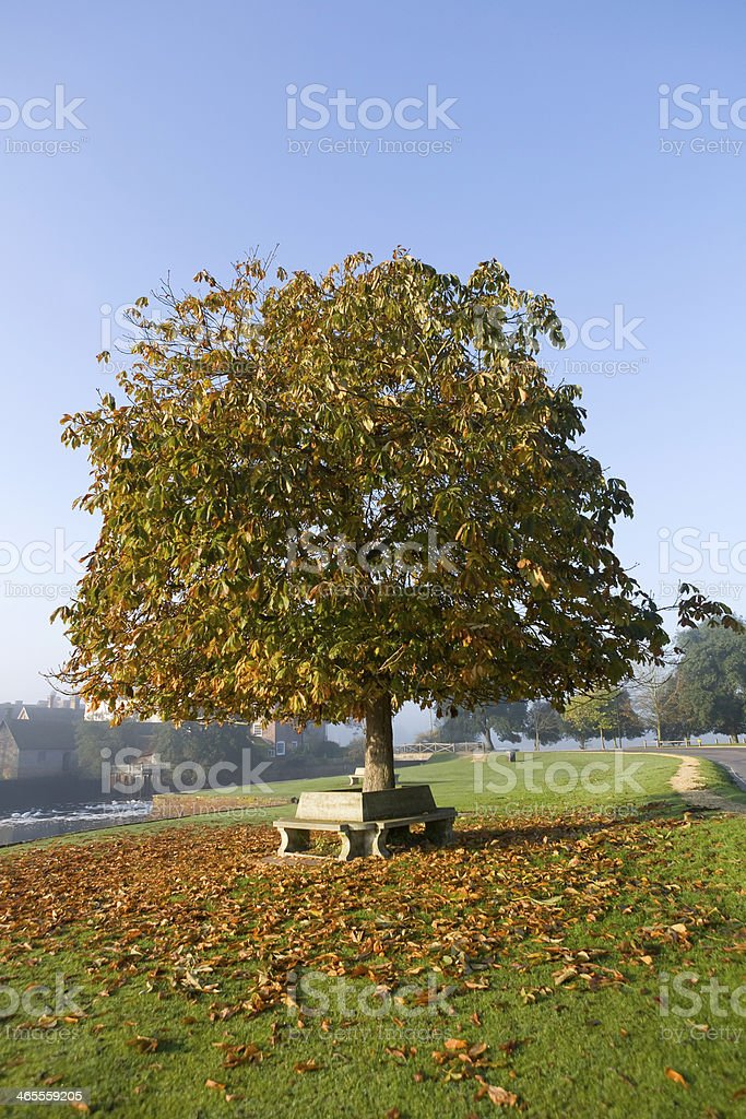 Autumn leaves Around Bench, Beaulieu, New Forest stock photo