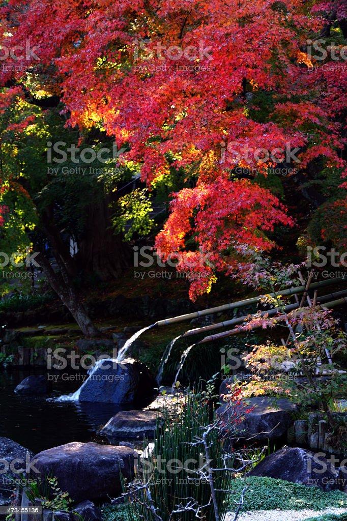 Autumn leaves at Hase temple, Kamakura, Japan stock photo