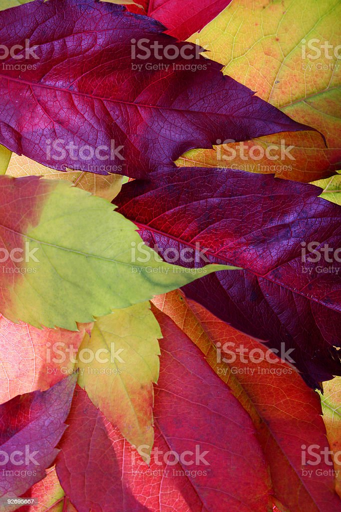Autumn leaves backgrounds royalty-free stock photo