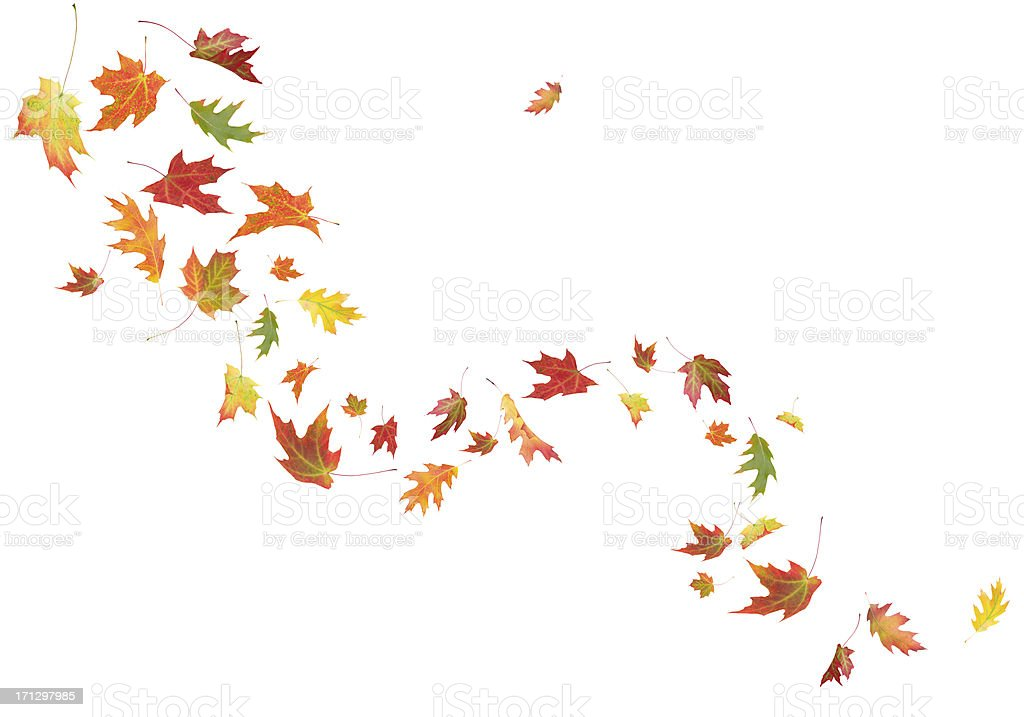 Autumn Leaves Blowing In The Wind stock photo 171297985 ...