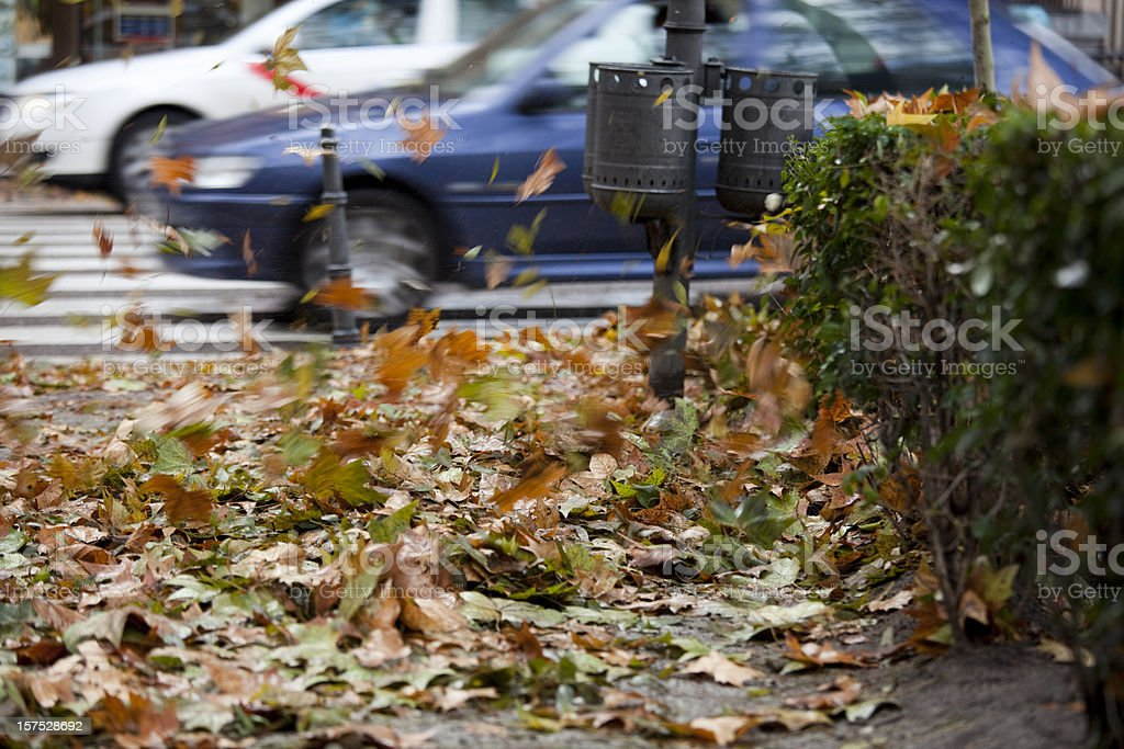 Autumn Leaves Blowing on Windy Cold Day, Madrid Spain royalty-free stock photo