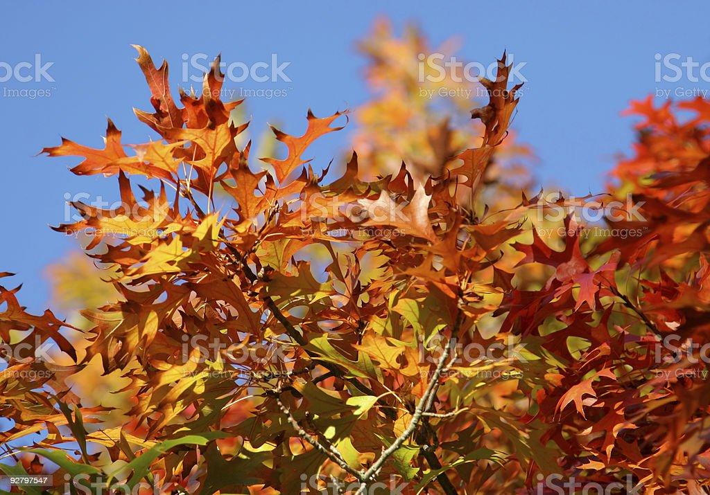 Autumn Leaves & Blue Sky stock photo