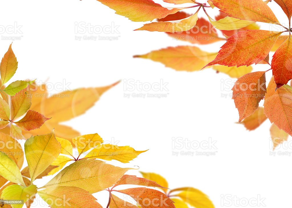 Autumn leaves branches stock photo