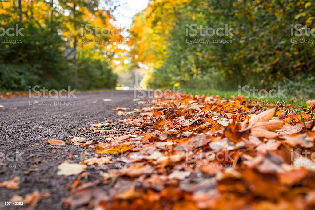 Autumn leaves by the road stock photo
