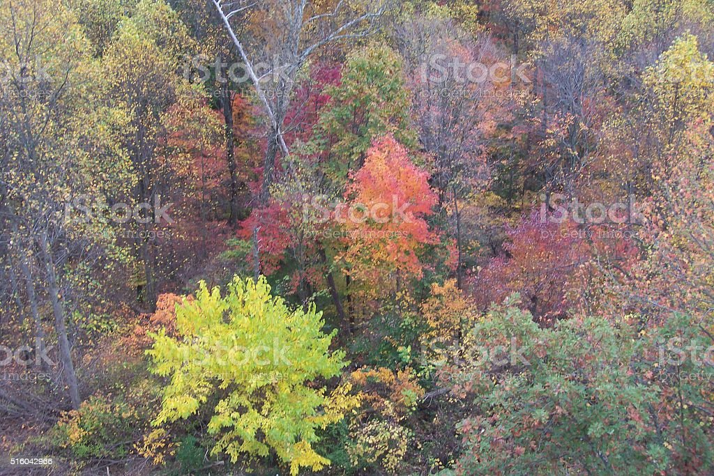 autumn leaves changing colors in Indiana stock photo