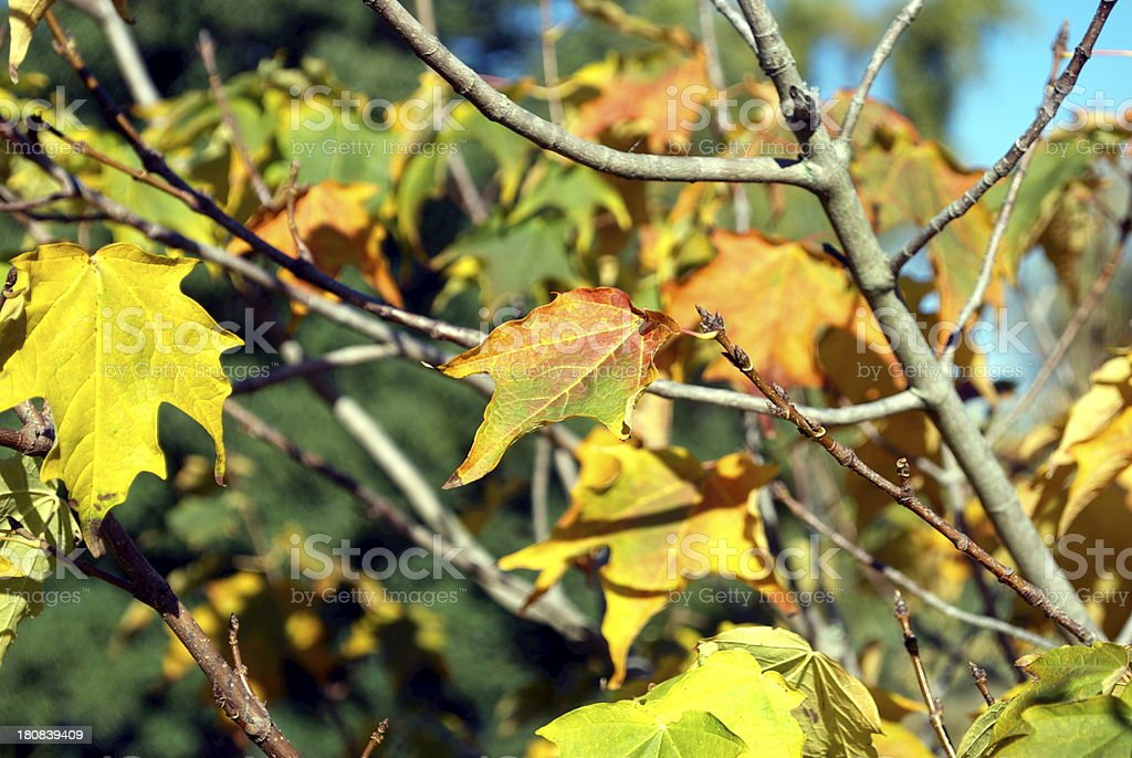 Autumn Leaves, Changing Seasons royalty-free stock photo