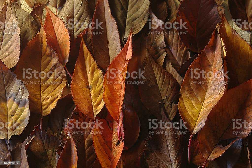 Autumn Leaves Collection stock photo