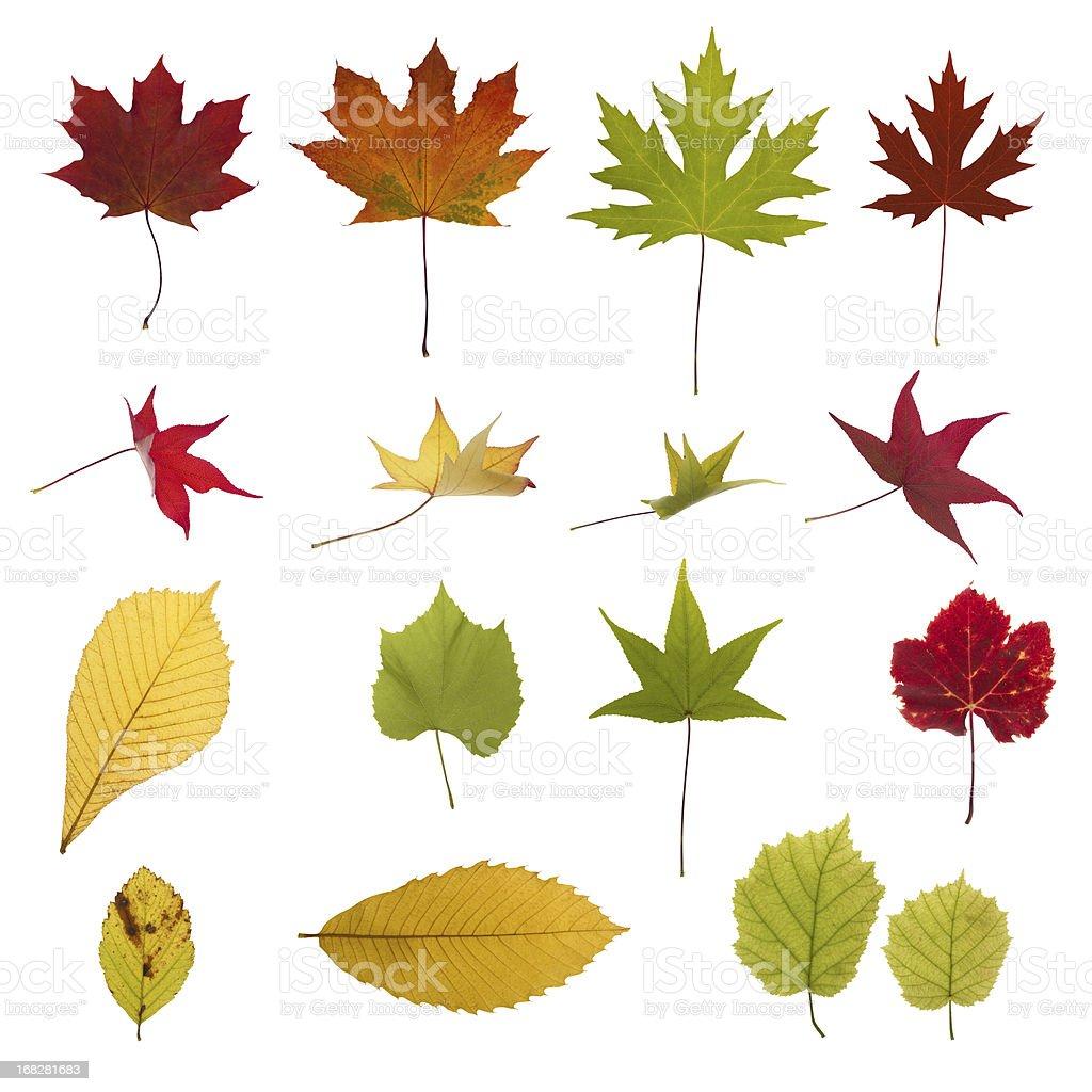 XXXL autumn leaves collection royalty-free stock photo