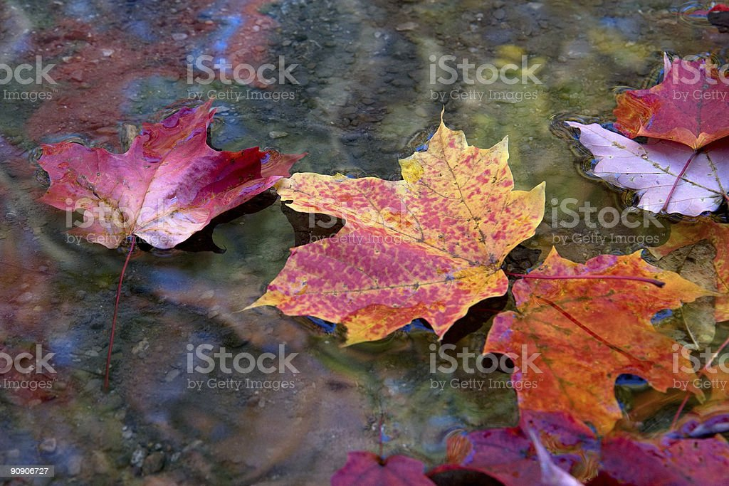 autumn leaves fall in line royalty-free stock photo