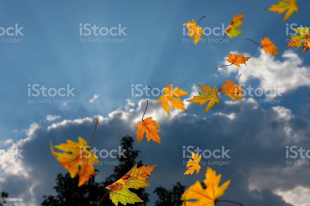 Autumn leaves falling against a sky background royalty-free stock photo