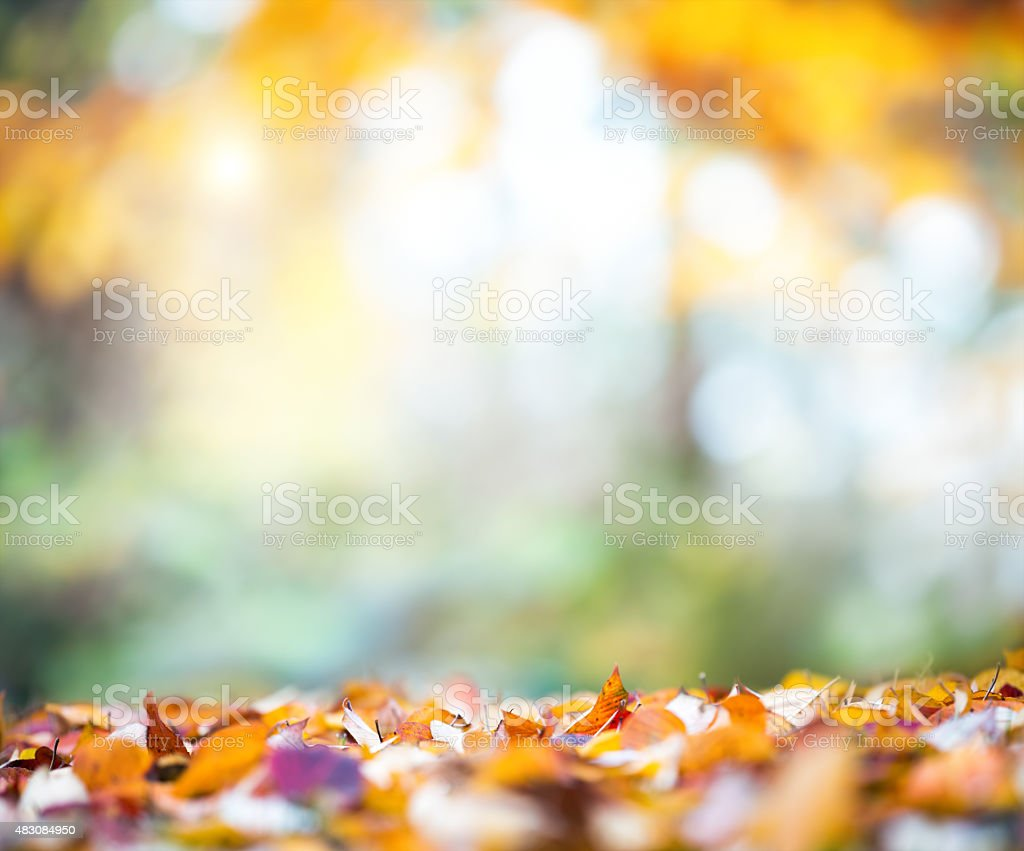 Autumn Leaves Falling From The Tree In Park stock photo