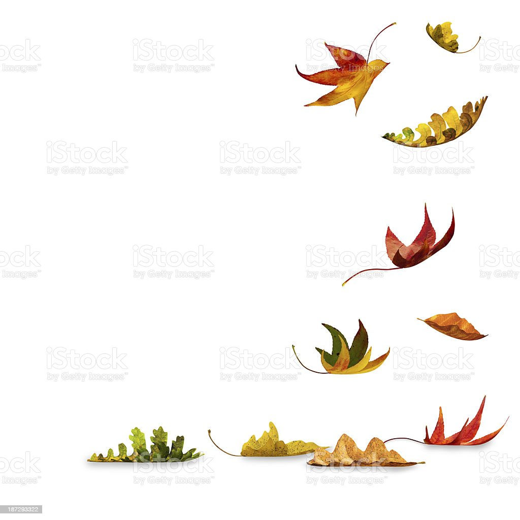 Autumn Leaves falling royalty-free stock photo