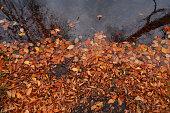 Autumn leaves falling river