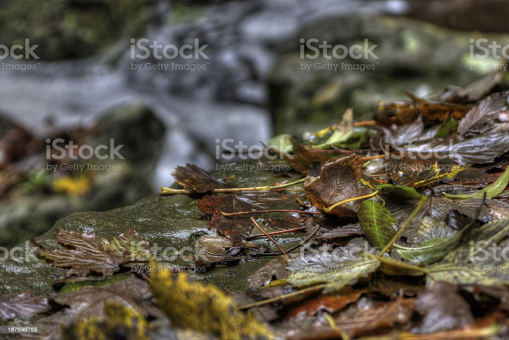Autumn leaves & fast water stock photo