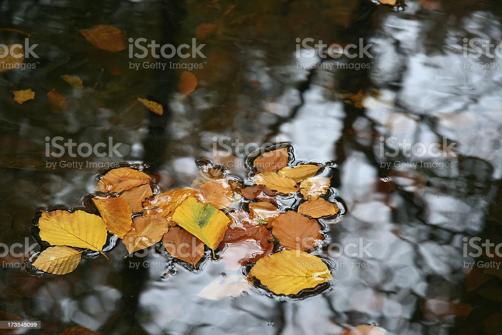 Autumn leaves floating on water royalty-free stock photo