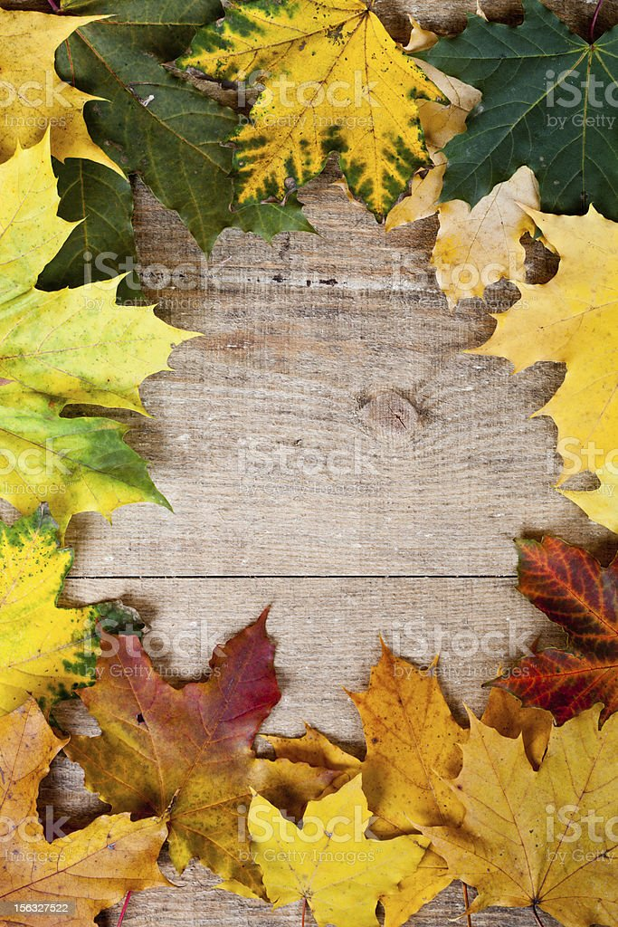 autumn leaves frame royalty-free stock photo
