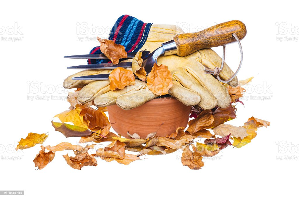 Autumn leaves, garden gloves and fork on pot, on white stock photo