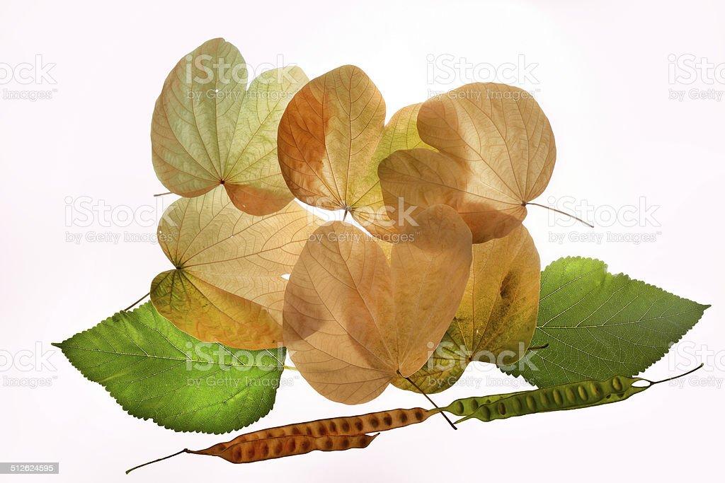 Autumn leaves green yellow nostalgy royalty-free stock photo