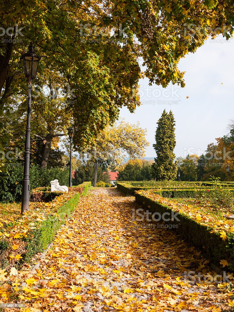 Autumn leaves in a park stock photo