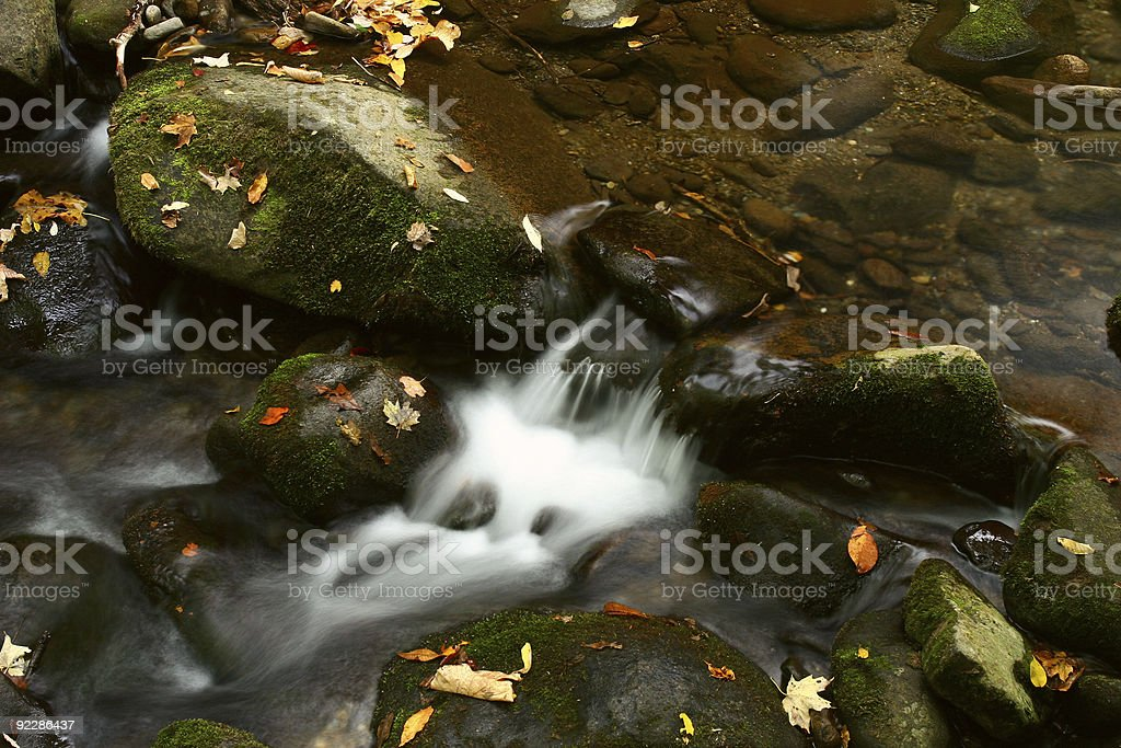Autumn Leaves in a Stream stock photo