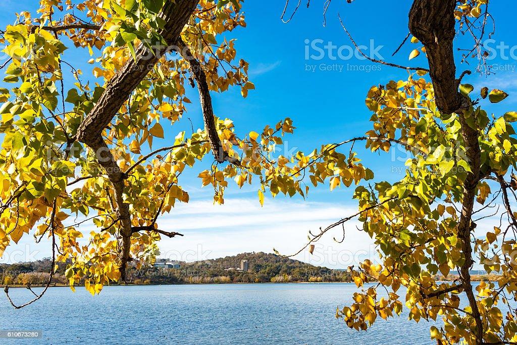 Autumn leaves in Bowen Park stock photo