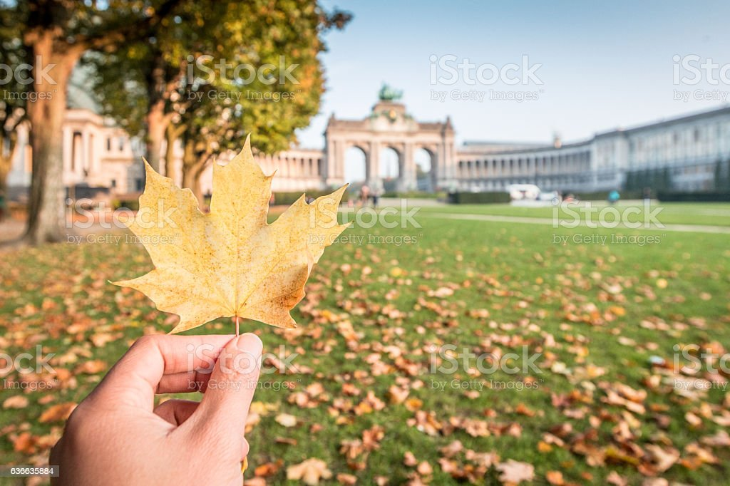 Autumn leaves in Brussels stock photo