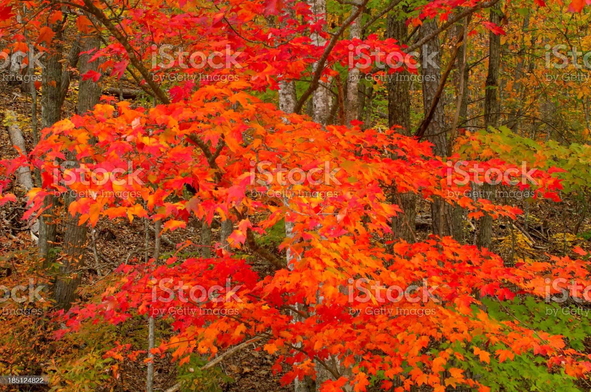 Autumn Leaves in Great Smoky Mountains National Park royalty-free stock photo