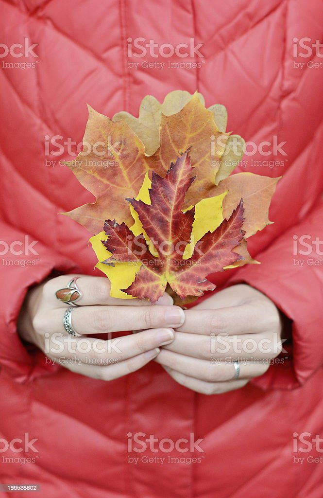 Autumn leaves in hands royalty-free stock photo