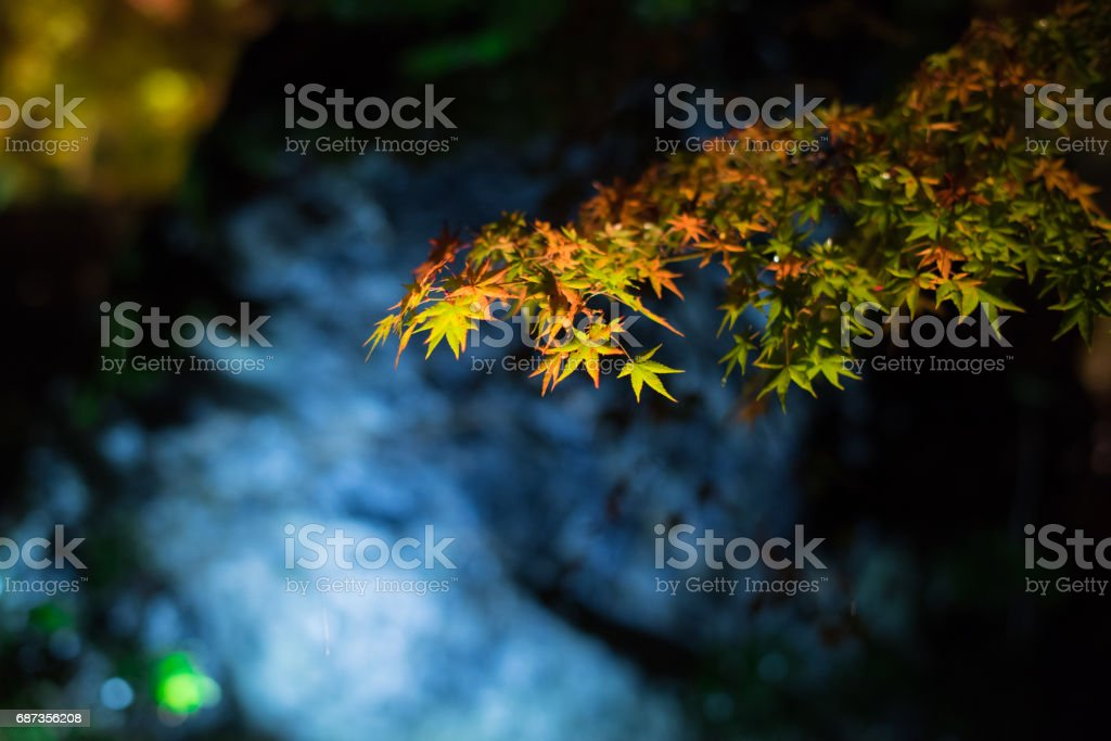 Autumn leaves in Kyoto in the rain stock photo