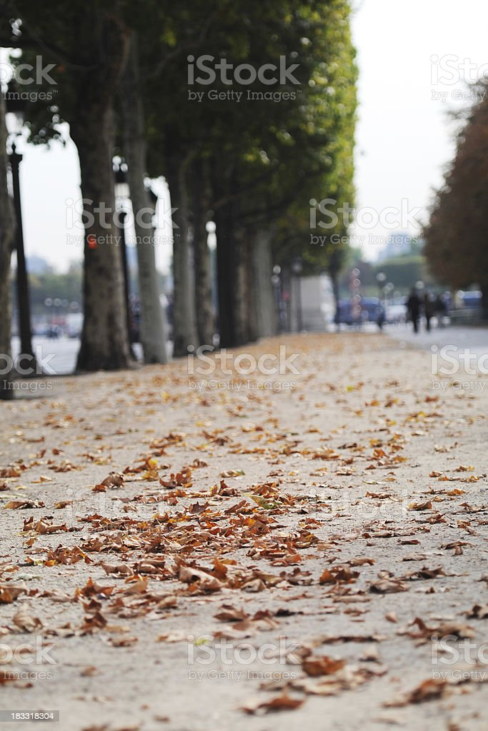 Autumn Leaves in Paris - XLarge royalty-free stock photo