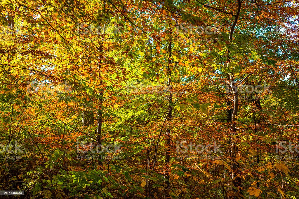 Autumn leaves in red and yellow colors stock photo