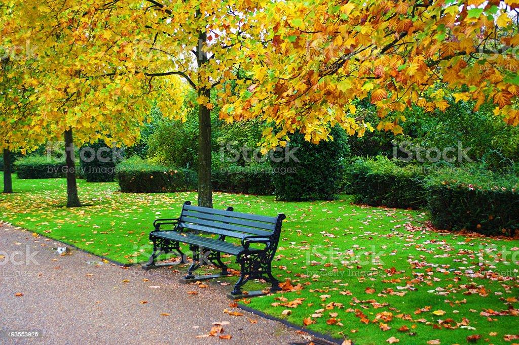Autumn Leaves in Regents Park London stock photo