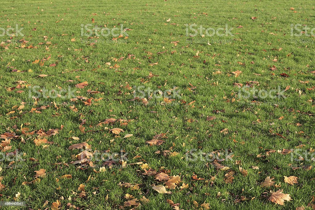 Autumn Leaves In Tha Grassland royalty-free stock photo
