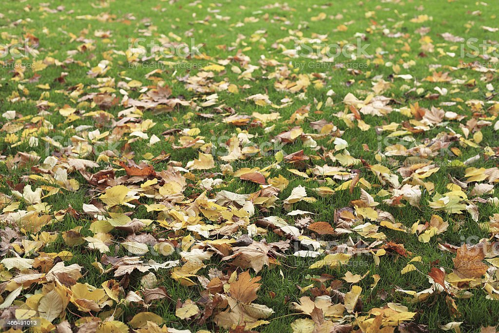 Autumn Leaves In Tha Grassland. royalty-free stock photo