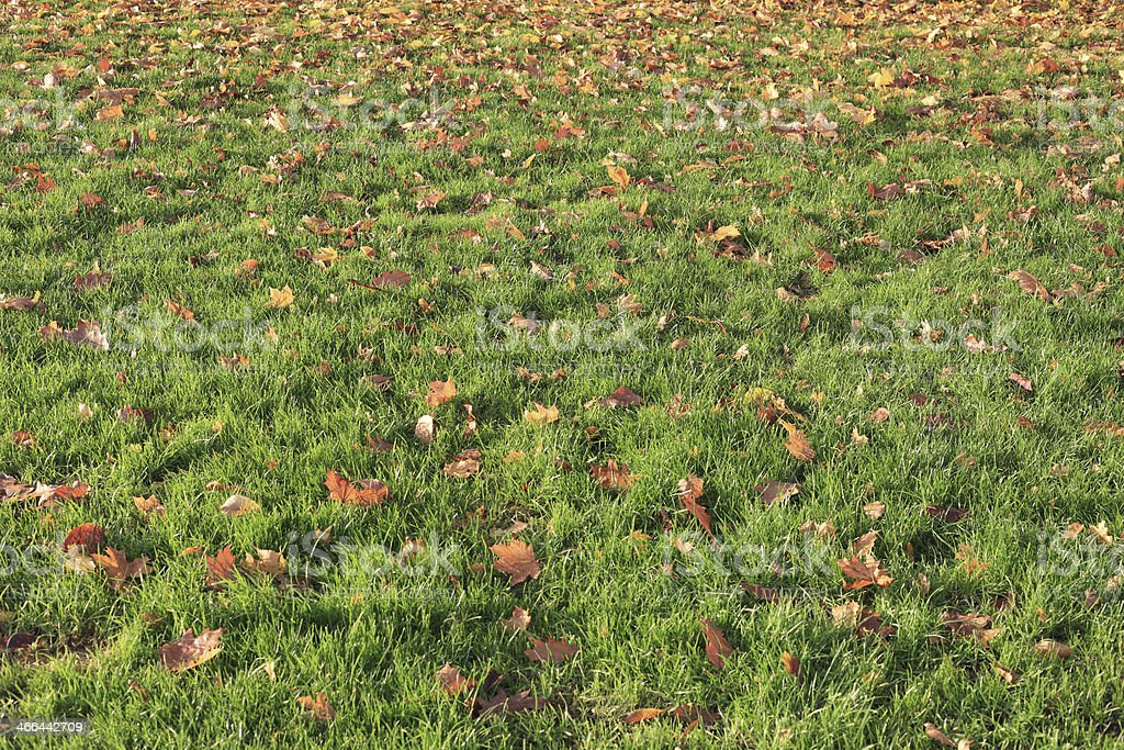 Autumn Leaves In The Grassland. royalty-free stock photo