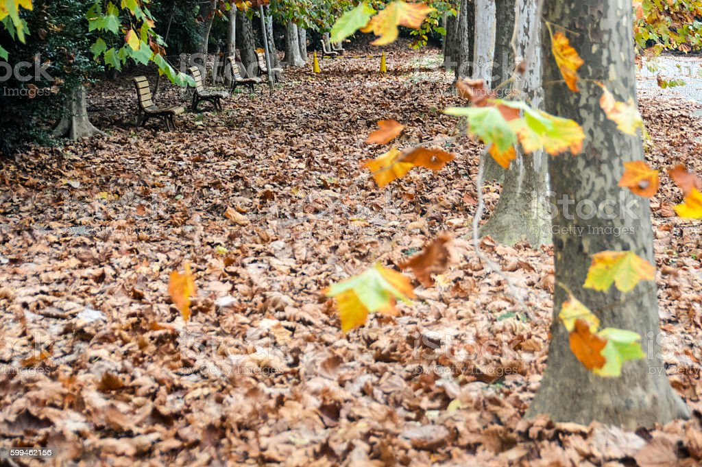 Autumn leaves in the park surrounding benches stock photo