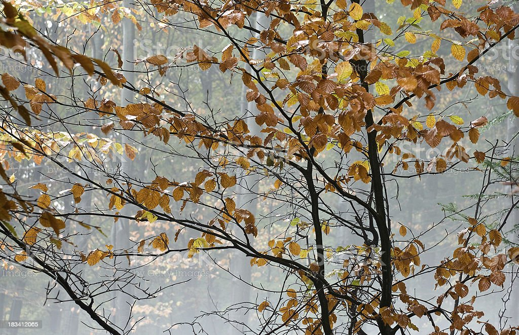 autumn leaves in winter forest royalty-free stock photo