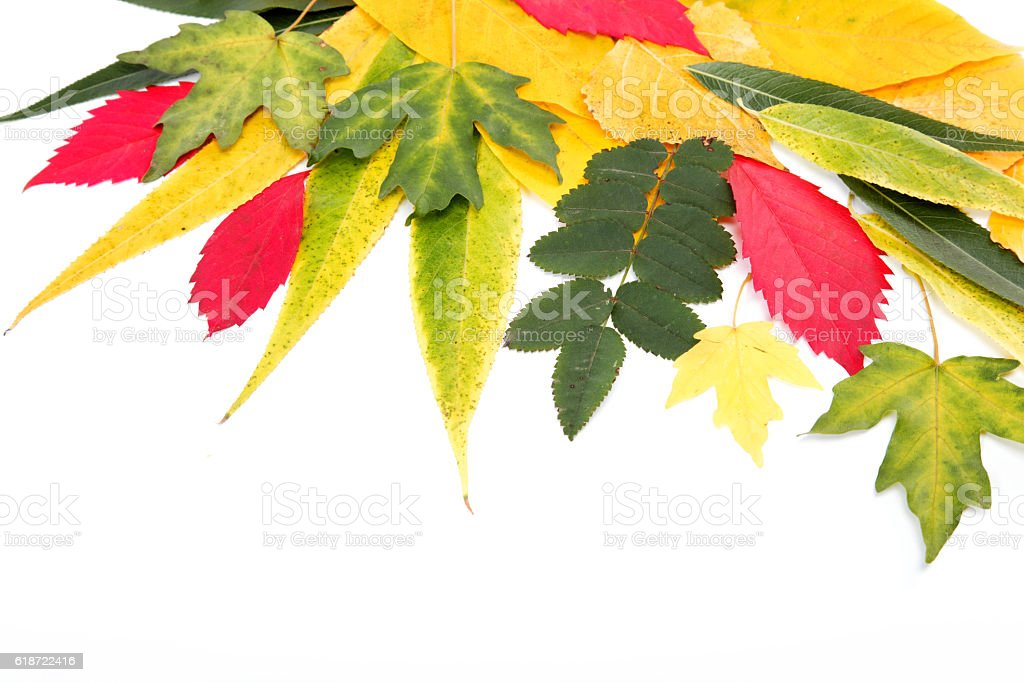 Autumn leaves isolated on white background. stock photo