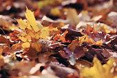 autumn leaves lay