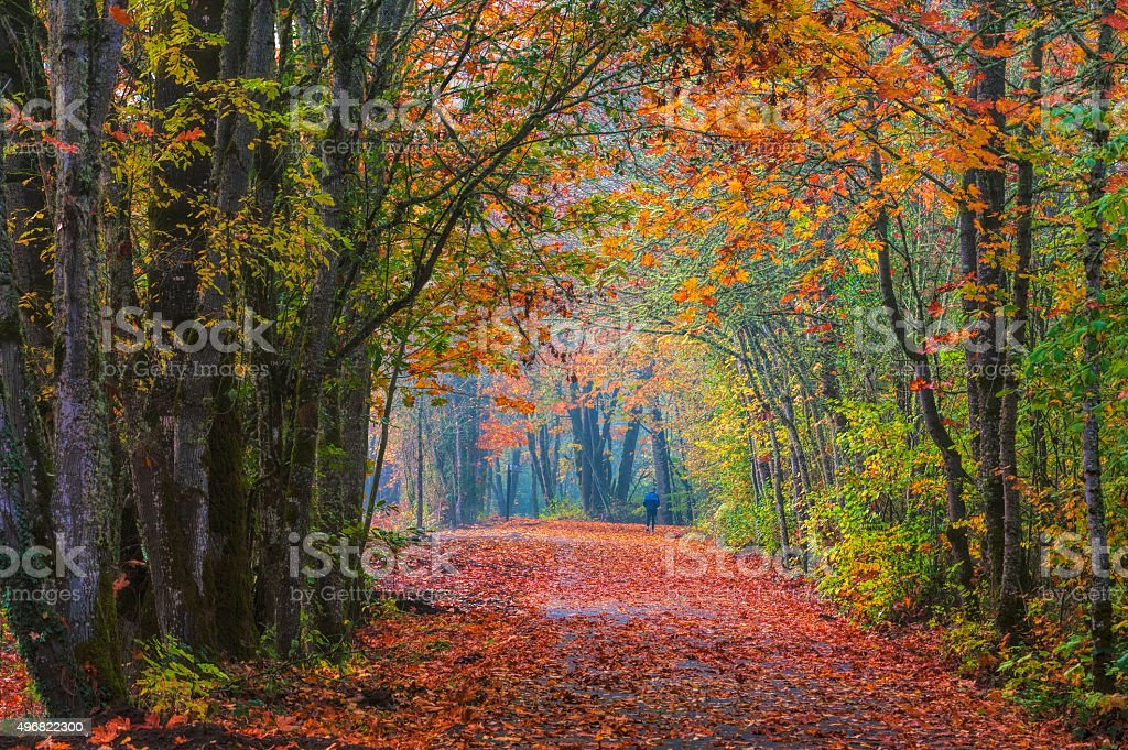 Autumn leaves litter a walking path stock photo